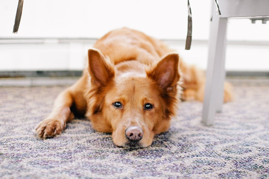 When Are Dog Owners Liable for Bad Behavior?